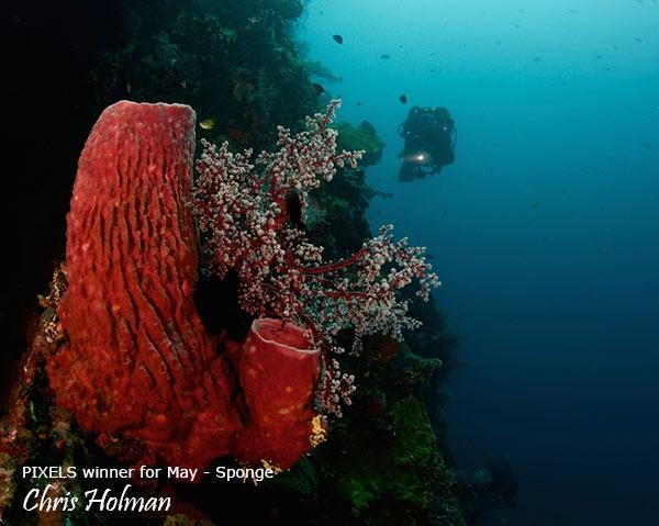 CH-Red-Sponge_CH-web