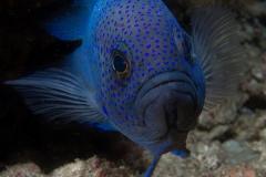 Fish_ADB-web