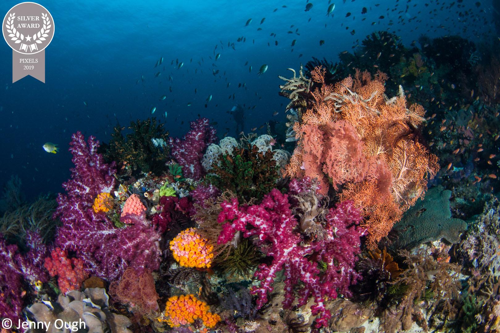 Copy-of-13-Jenny_Ough_Pixels_Pastel-Reef