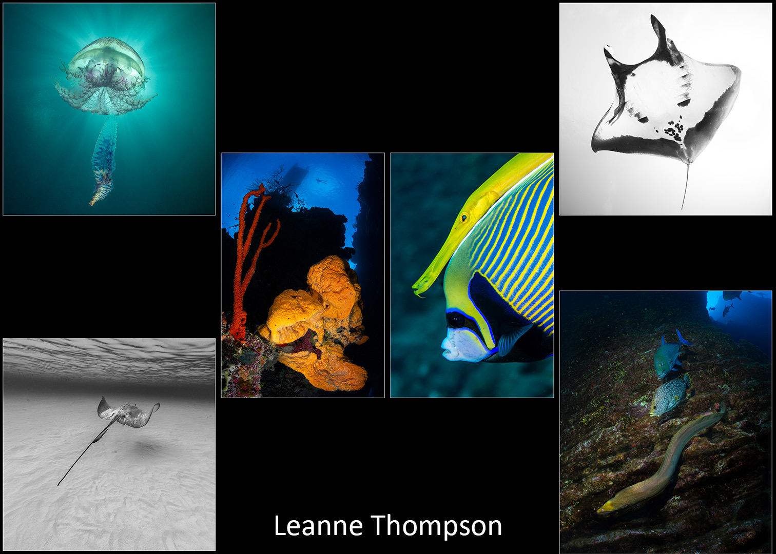 Leanne-Thompson_open-portfolio-2020-V2-web