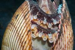 3-Ross_Gudgeon_Pixels_CoconutOctopus