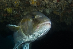 fish_ML-web