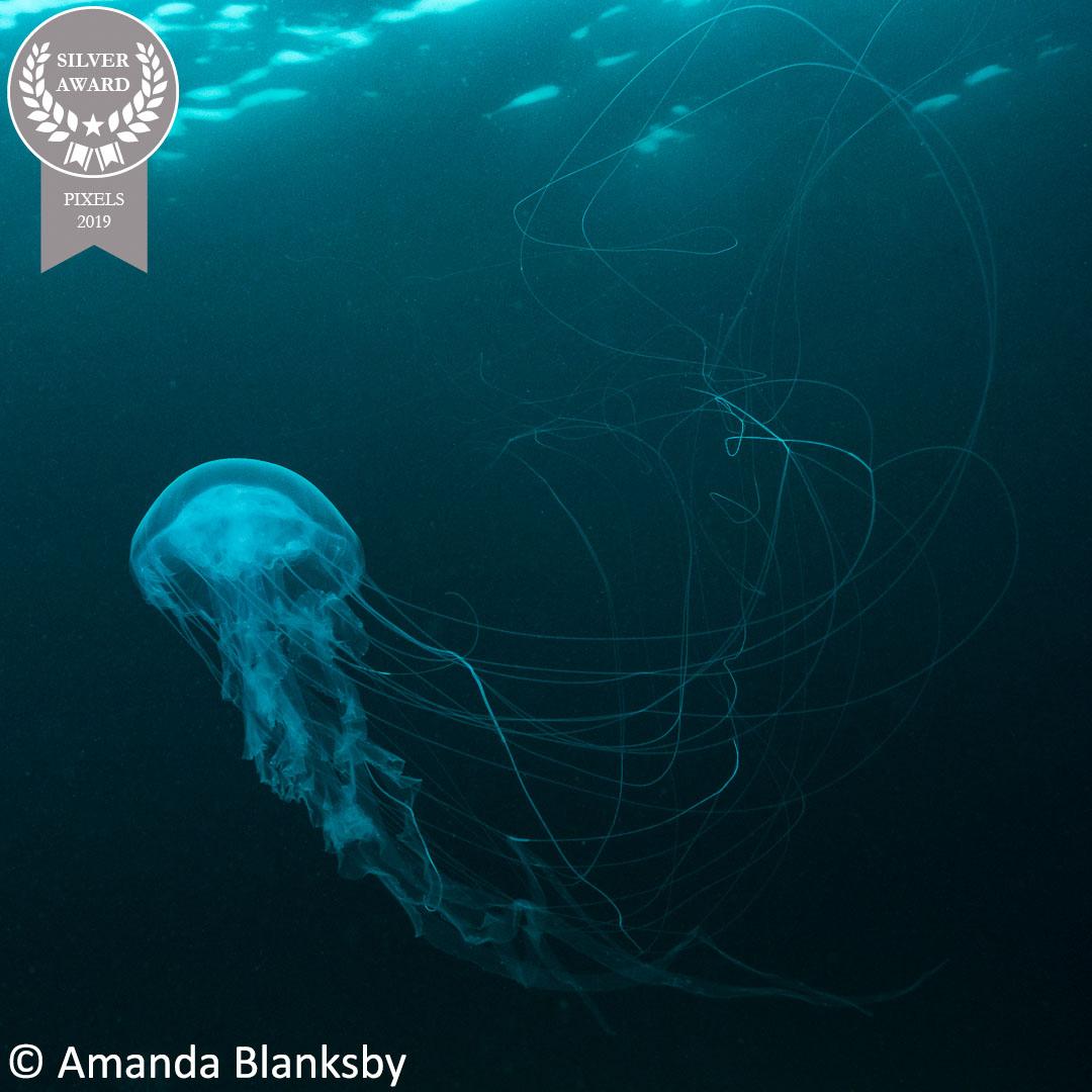 18-Amanda-Blanksby_Pixels-19_Floating-Jelly