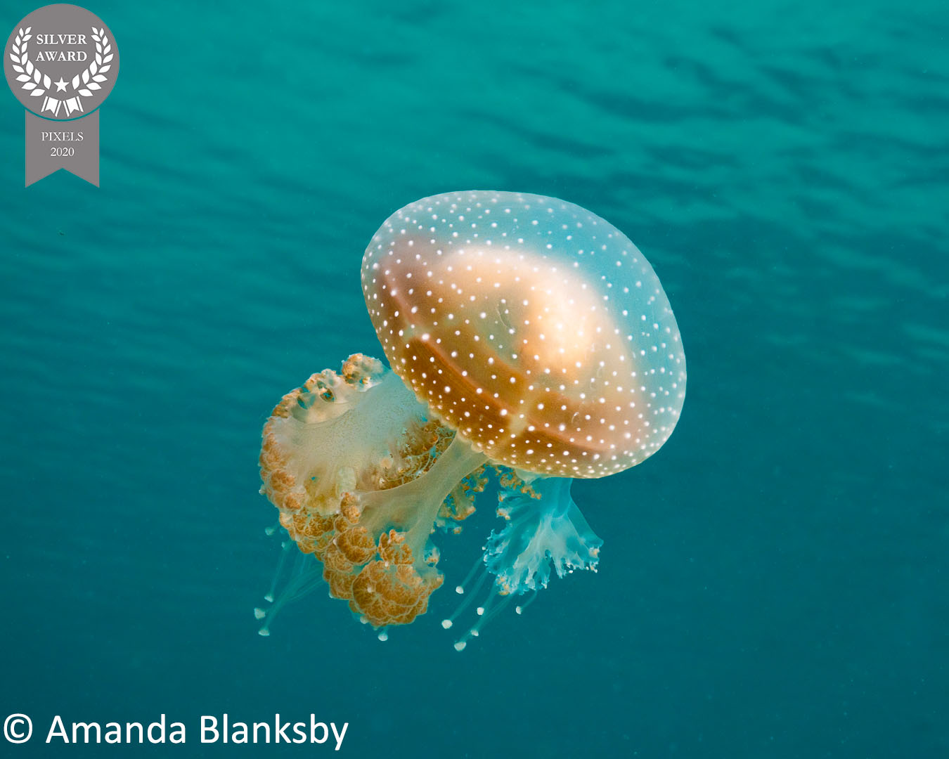 4-Amanda-Blanksby_Pixels-20-Jan_Floaty-Jelly
