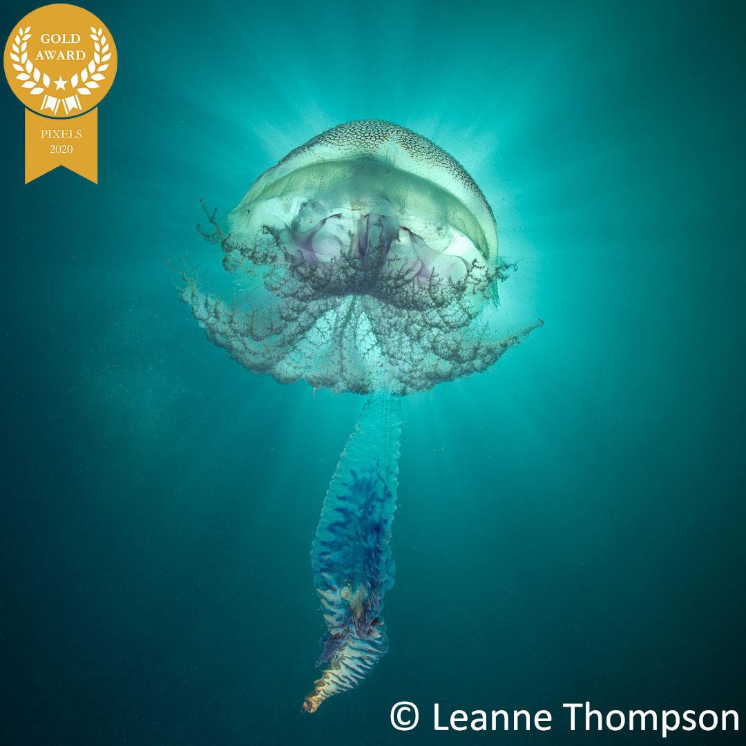 7-LeanneThompson_PixelsSquidgy_Jelly-Ball