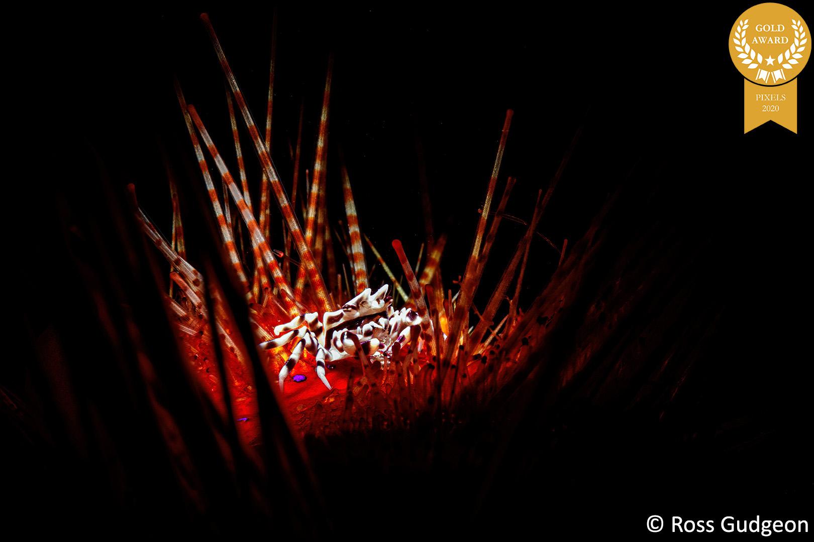 10-Ross_Gudgeon_Pixels_ZebraCrab