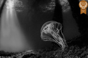 2-Ross-Gudgeon_Pixels_-Jellyfish