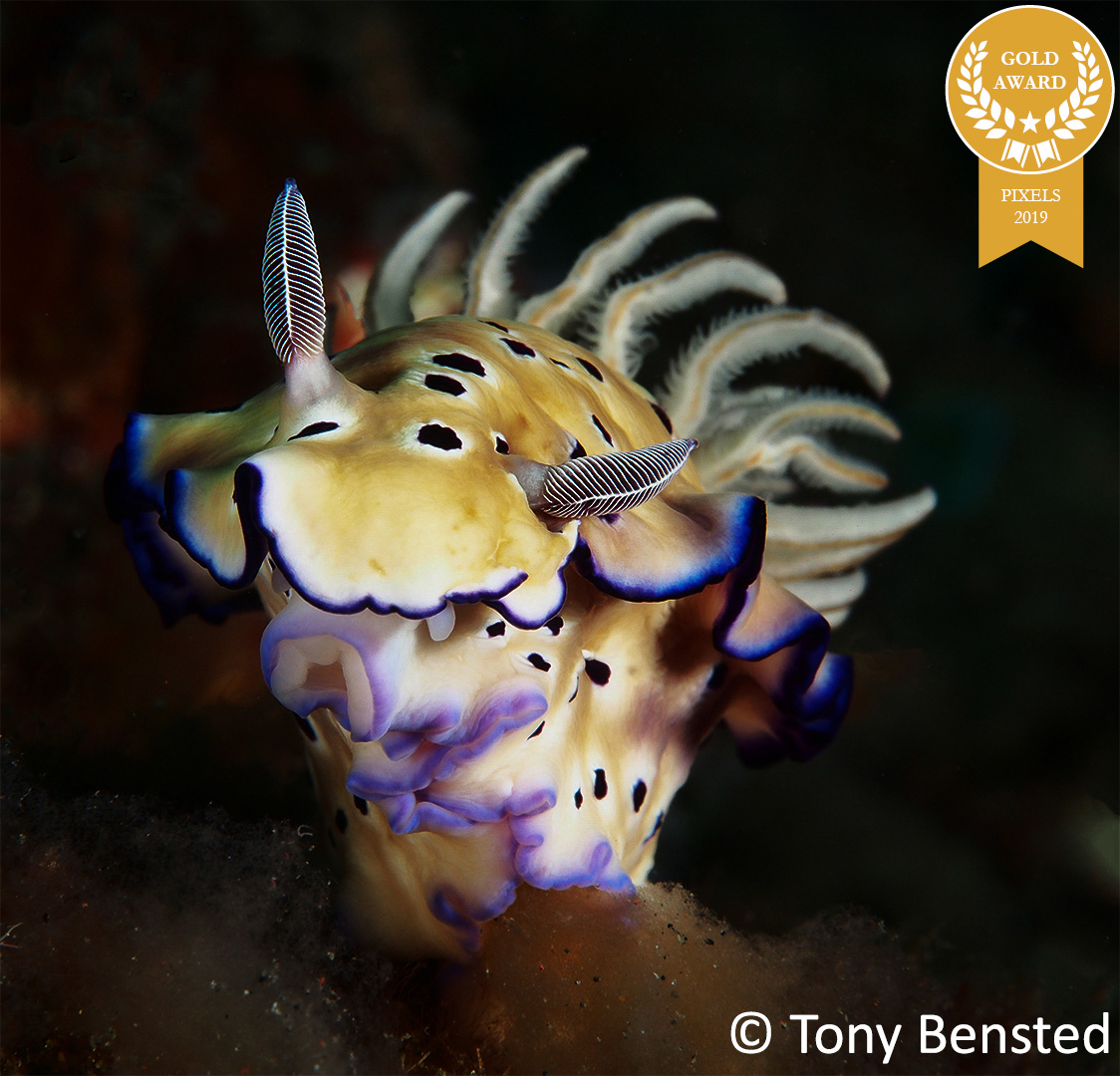 8-Tony-Bensted_Pixels_Nudibranch