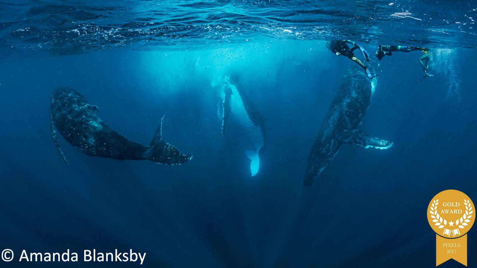 9-Amanda-Blanksby-Pixels-19-November-Crazy-Whale-Threesome-