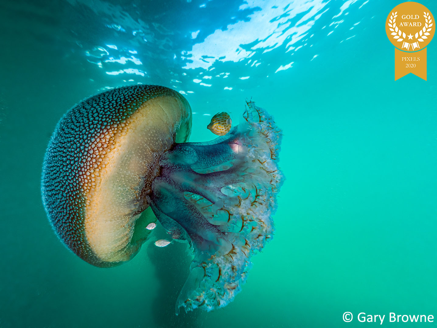 1-GB-Ammo-Jellyfish-and-Friends-G