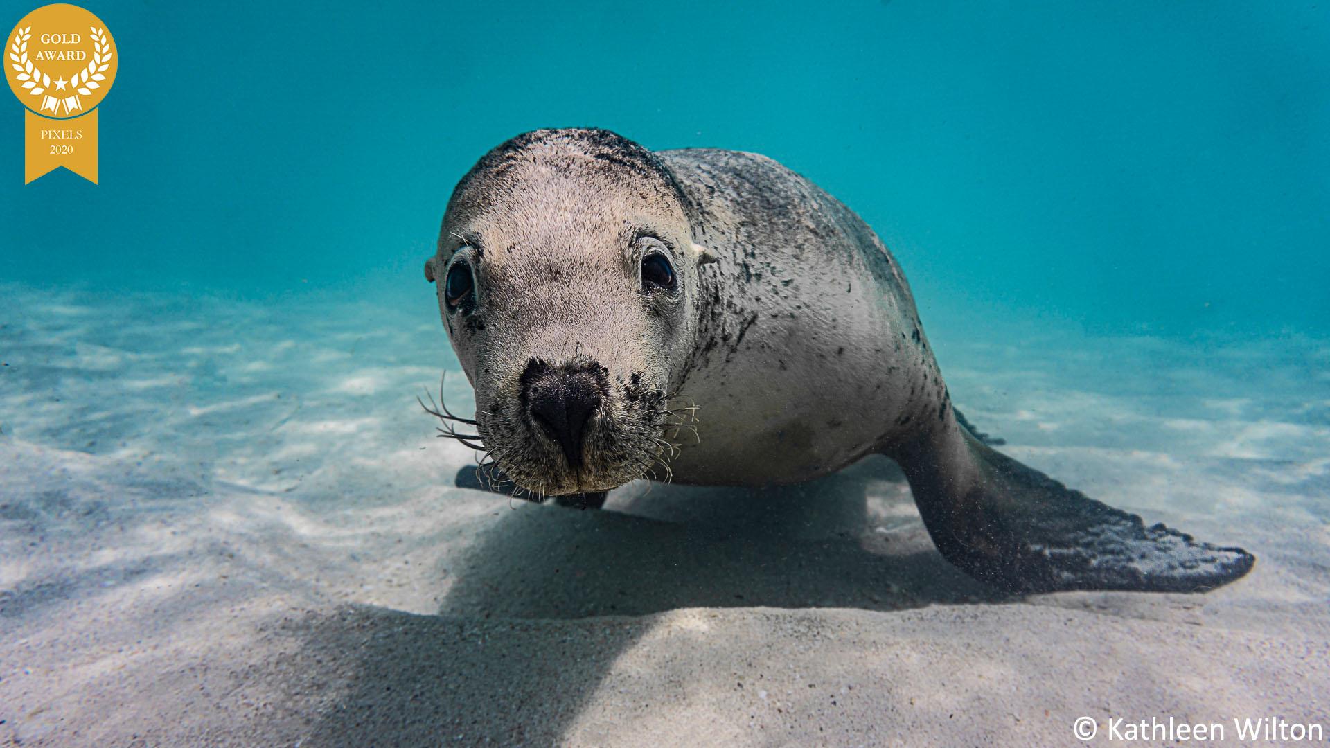 8-kathleen-wilton-final-sea-lion-for-Pixels-G